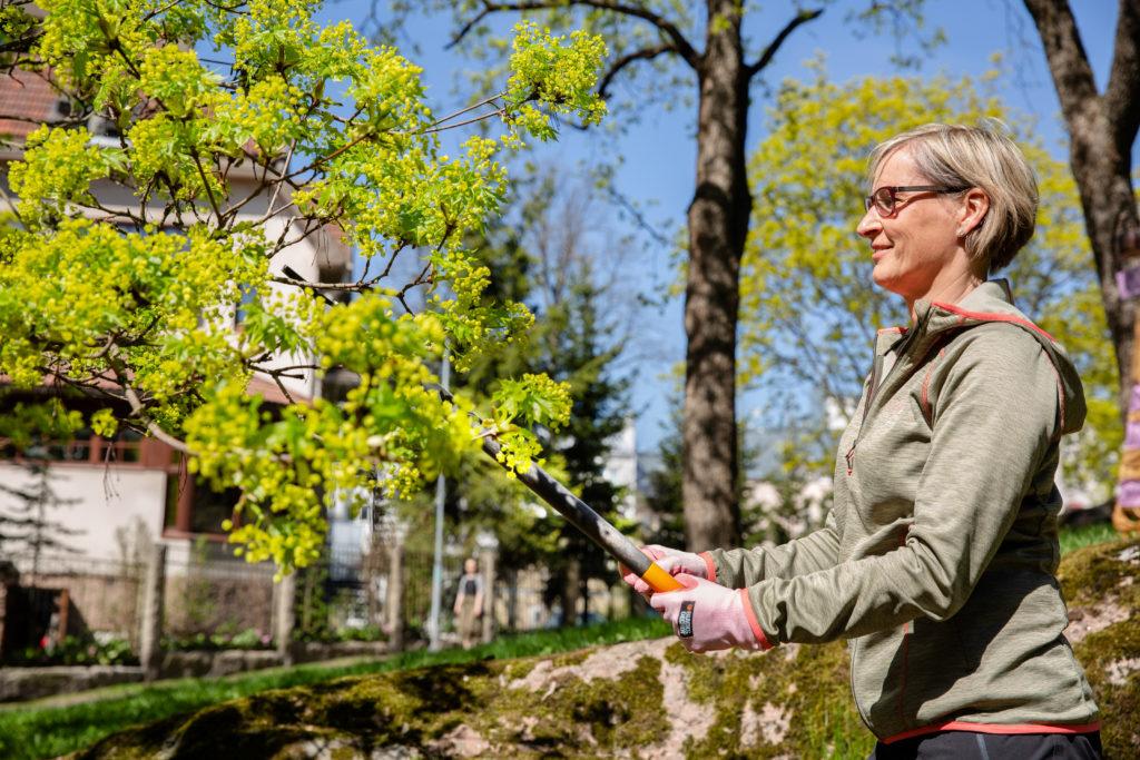 Nainen leikkaa puutarhasaksilla pensasta.