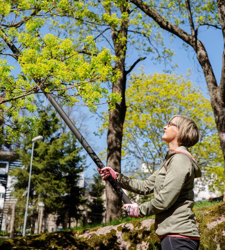 Nainen leikkaa puita pitkävartisilla oksasaksilla.